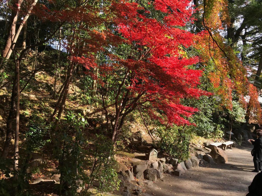 秋葉山量覚院 紅葉