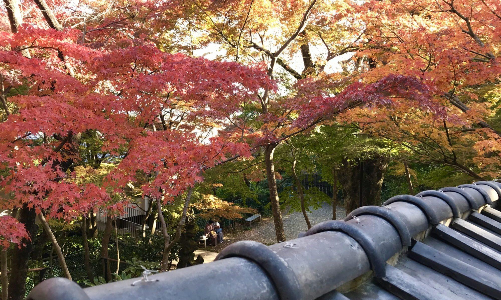 老欅荘 紅葉