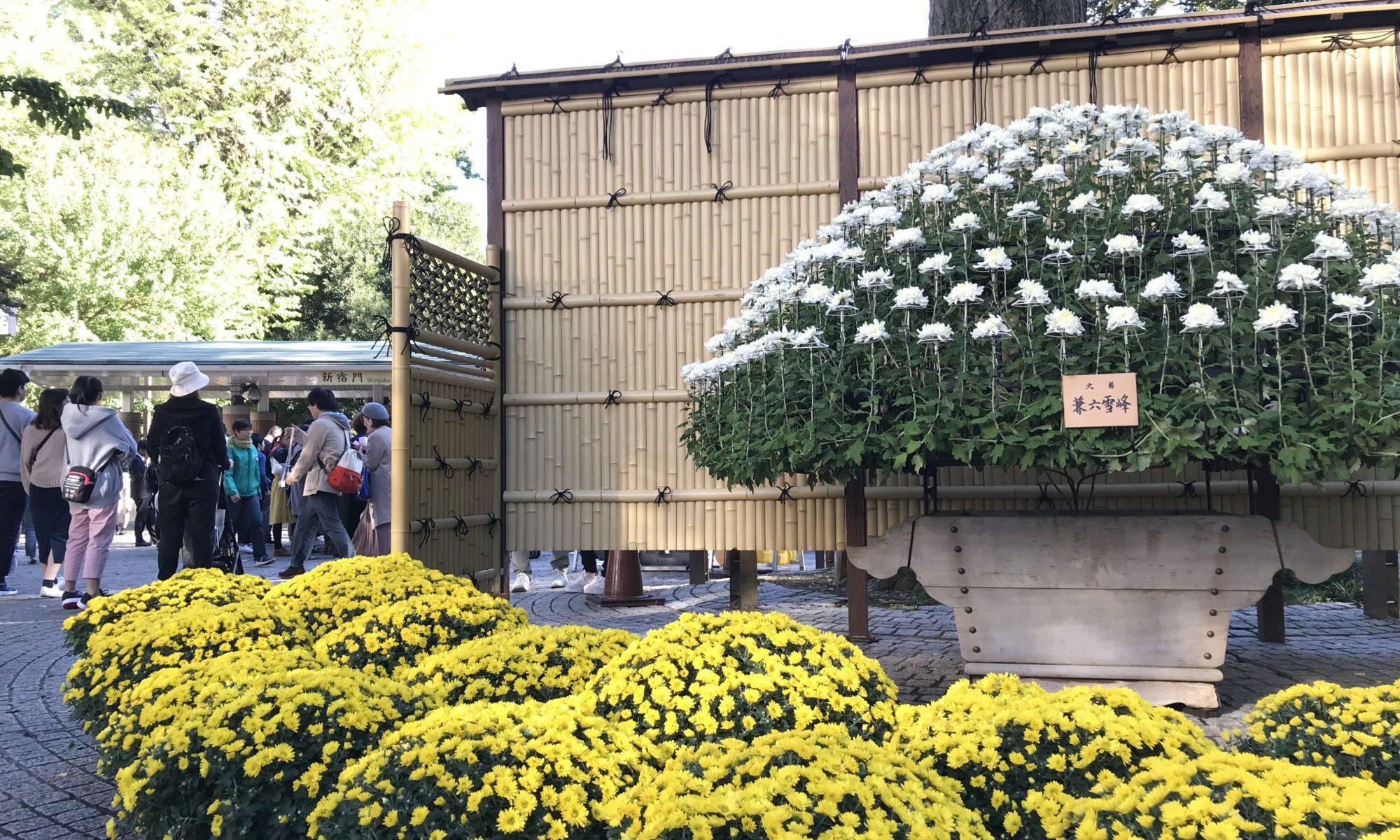 菊花壇展 新宿門