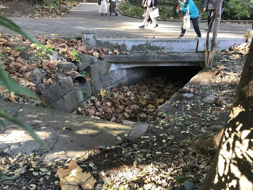 下の池からの排水口