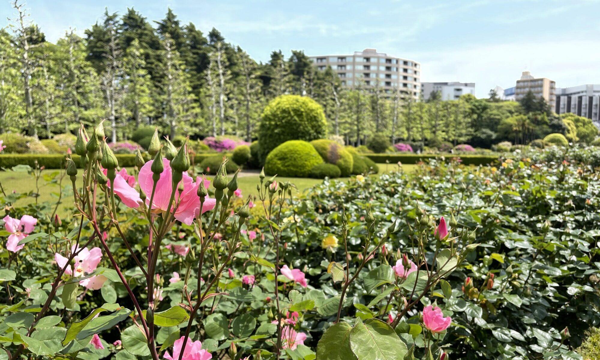 新宿御苑 バラ